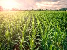 "Roadmap will help to make food crops ""future-proof"""